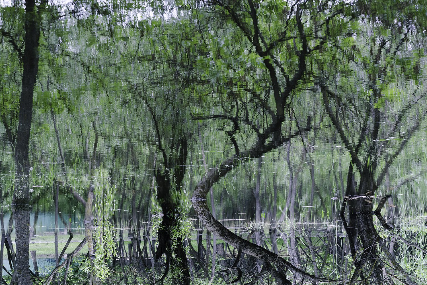 Twisting trees. Green forest. Abstraction. Reflection. example image 1