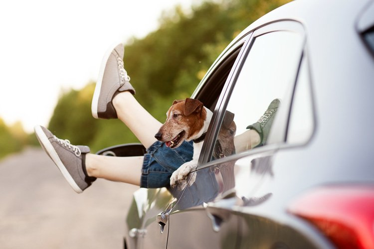 Legs of a girl sticking out of a car window next to a dog example image 1
