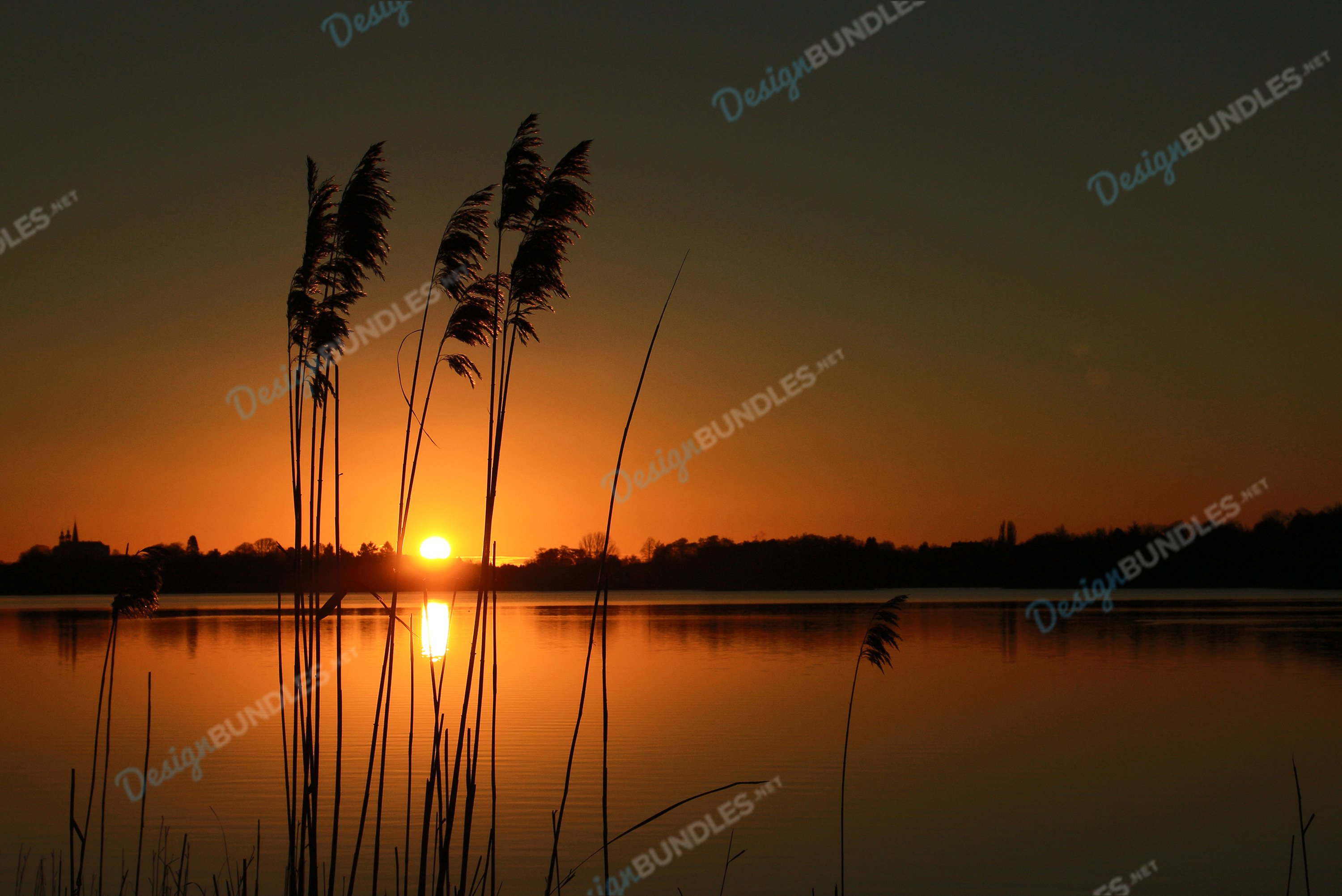The sun sets in the gap of the weeds example image 1