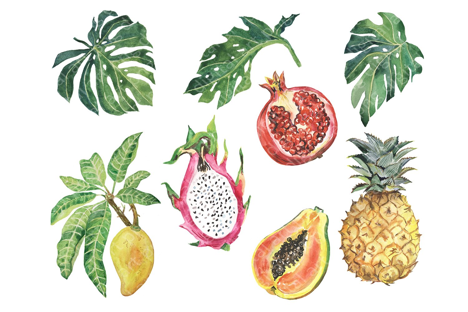 Watercolor tropical fruit clipart. Summer clip art. Fruits example image 3