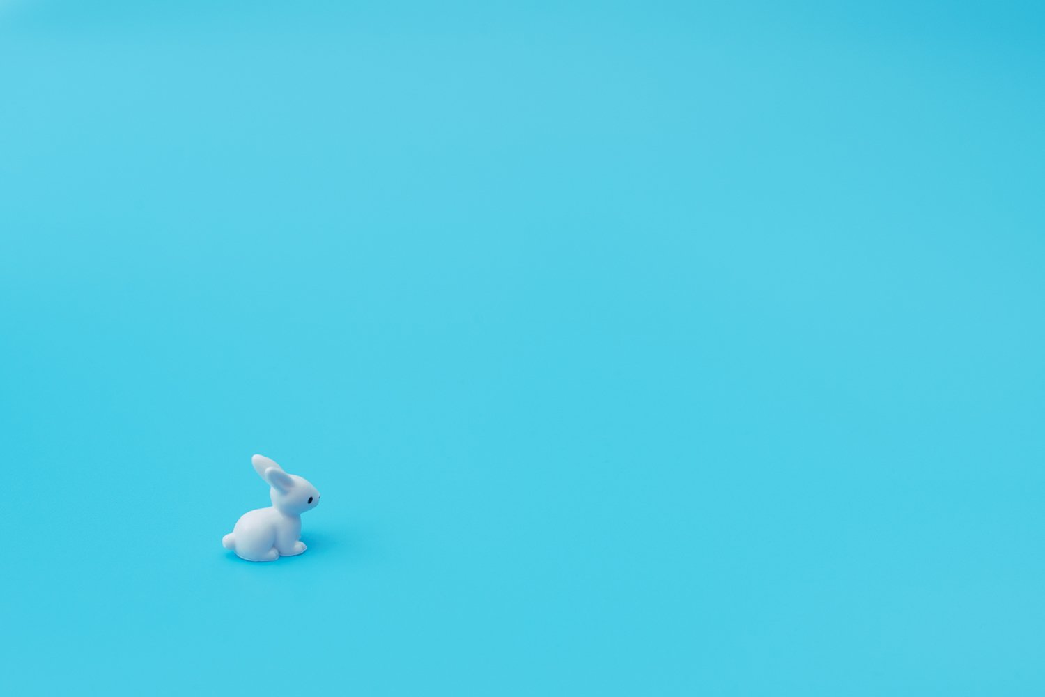 Small white rabbit sits on blue background. example image 1