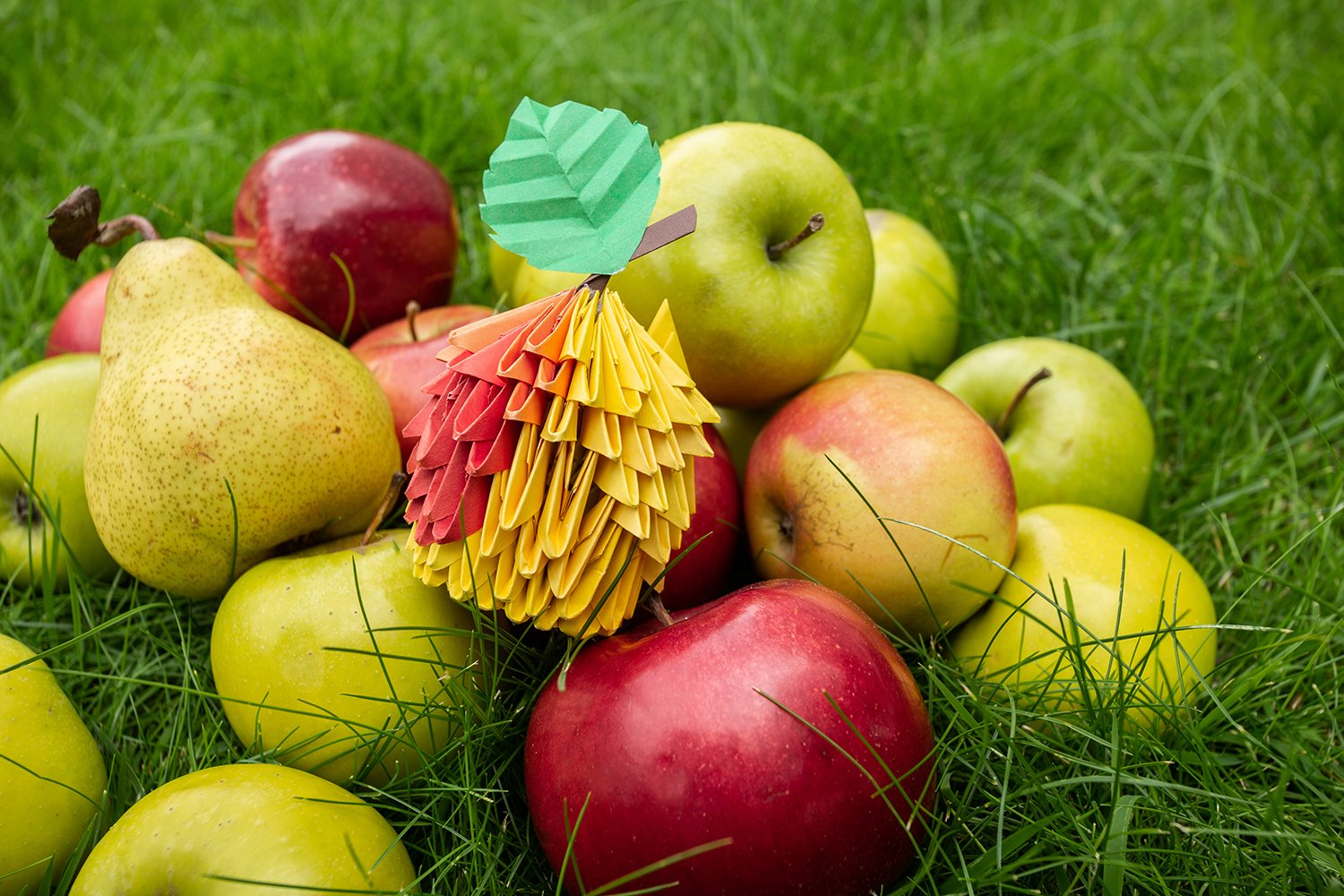 Autumn Apple harvest background wicker basket on green grass example image 1