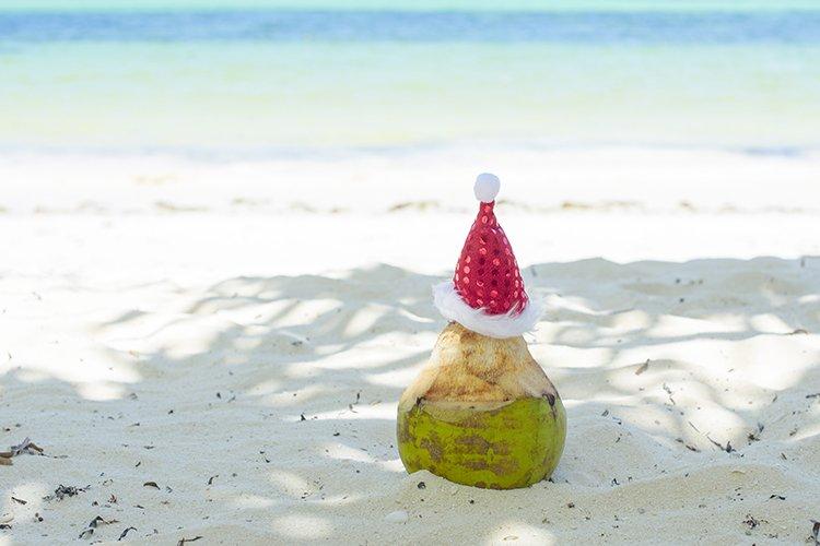 Coconut in Santa's hat example image 1