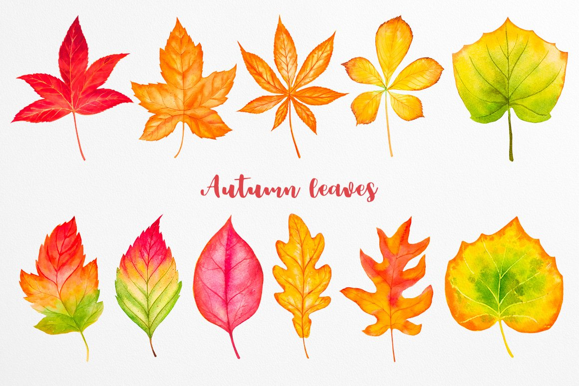 Fall collection. Watercolor. example image 5