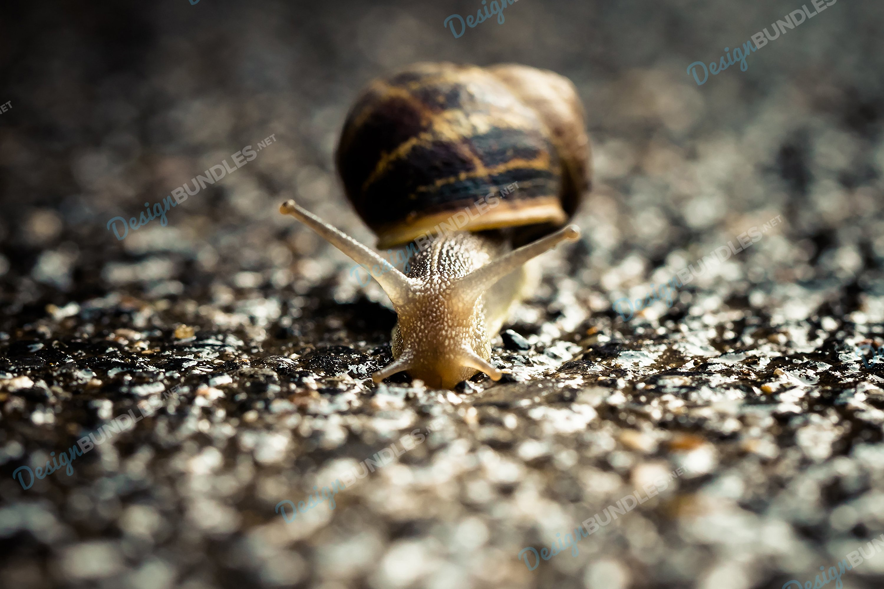 Stock Photo - Close-Up Of Snail example image 1