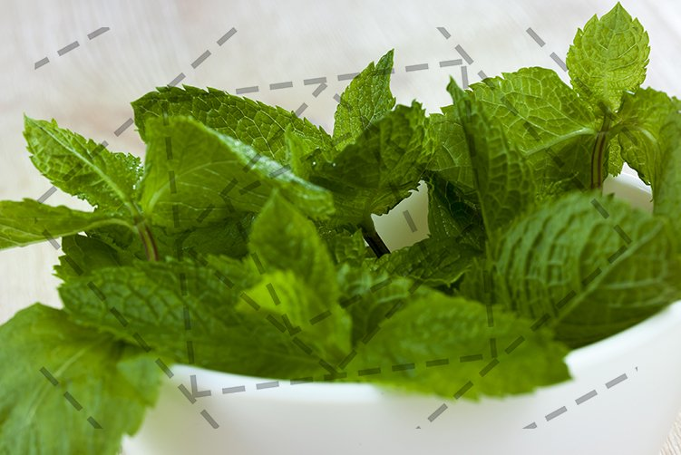 green aromatic mint example image 1