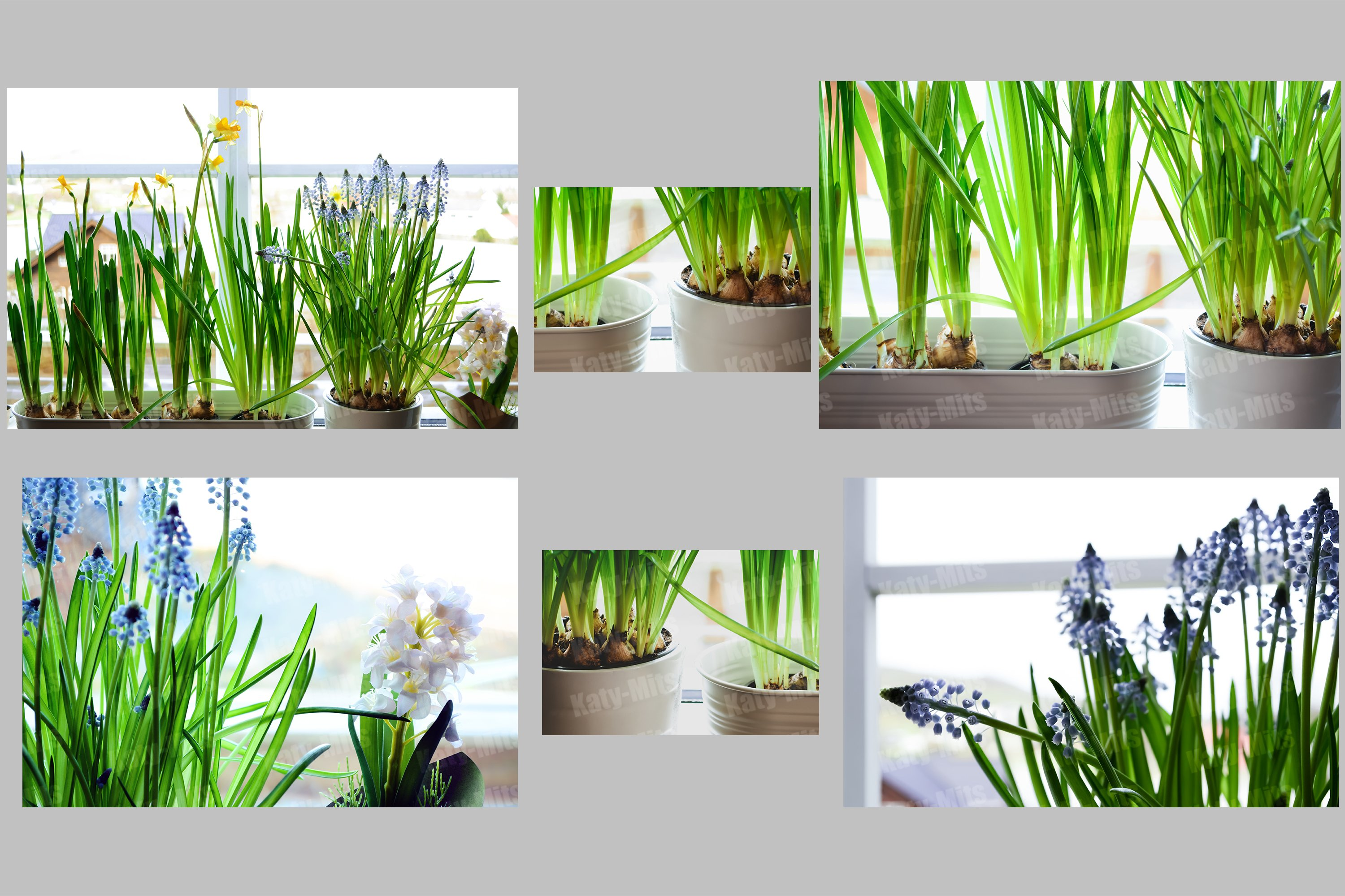 Bulbous plants in the interior. Set of 6 photos example image 1