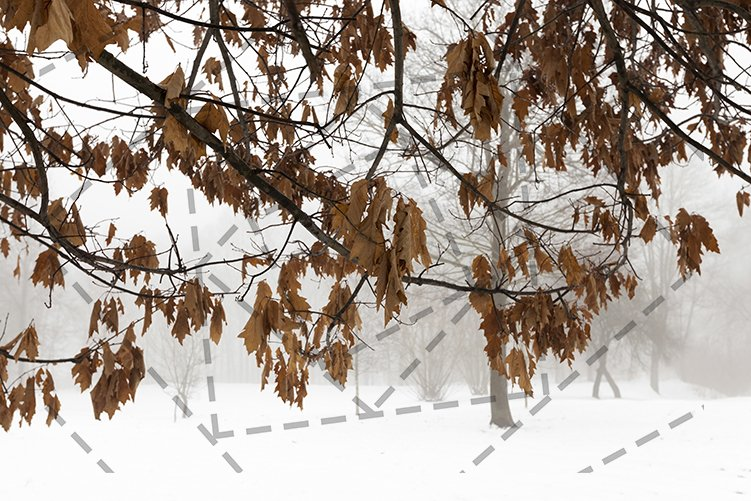 oak in winter example image 1