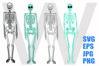 Skeleton Whole Body - SVG-EPS-JPG-PNG example image 1