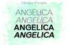 ANGELICA, A Thin Typeface example image 4