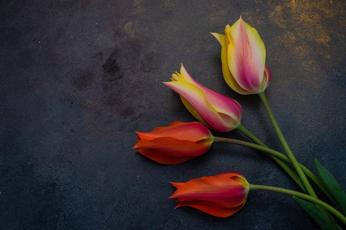 Beautiful tulip flowers example image 1