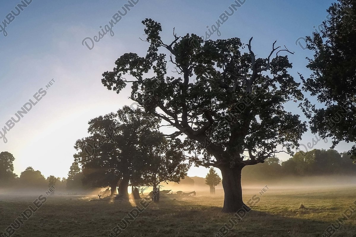 Stock Photo - Trees On Field Against Clear Sky example image 1