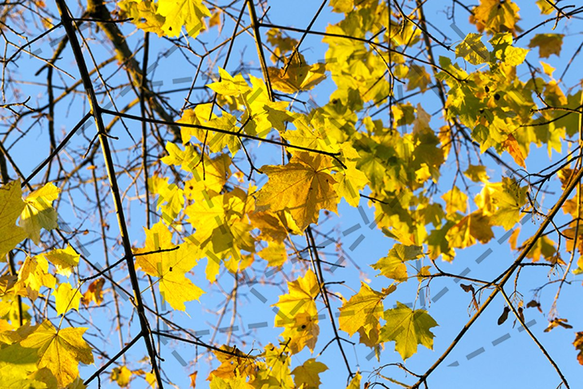 yellowing leaves example image 1