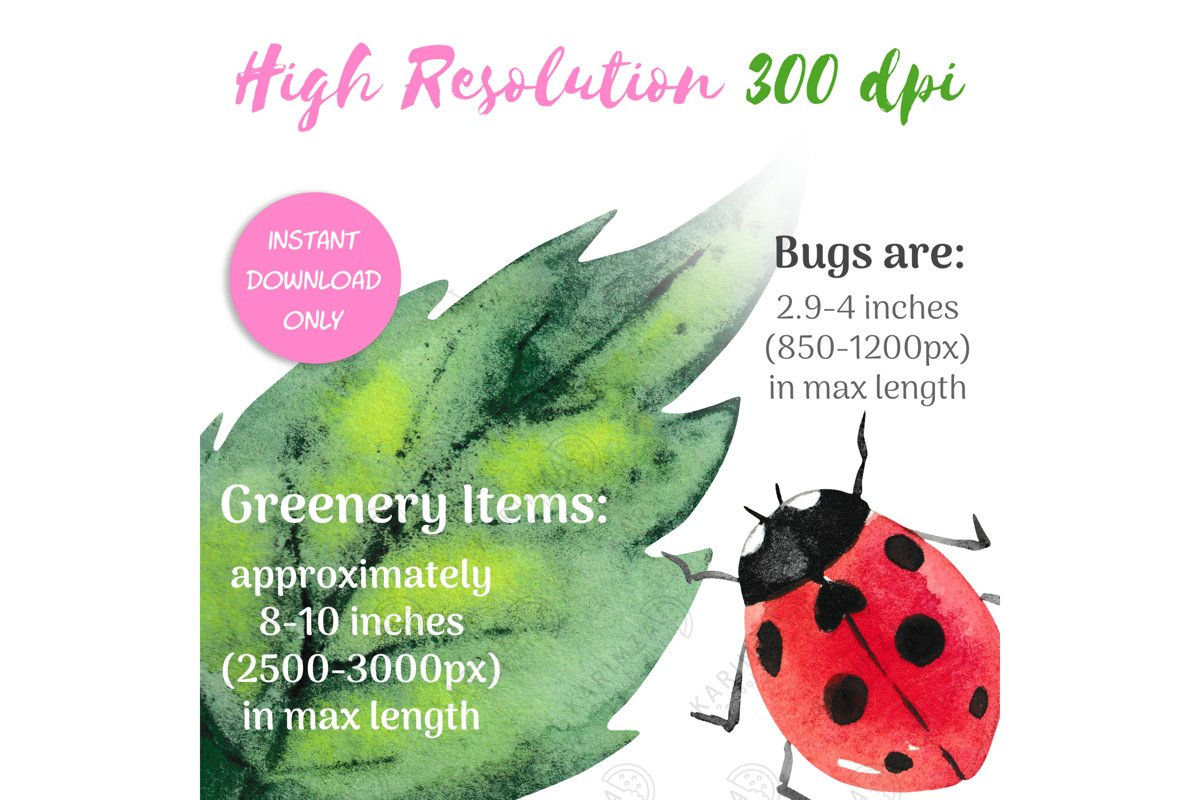 BUG CLIP ART, Watercolor Insects and Greenery Clipart example image 1