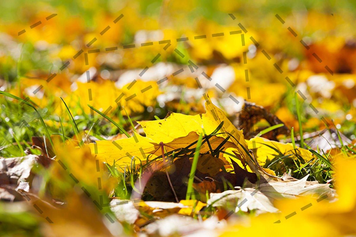 autumn yellow foliage example image 1