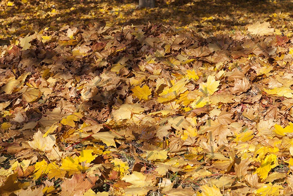 Fall foliage wilderness closeup example image 1