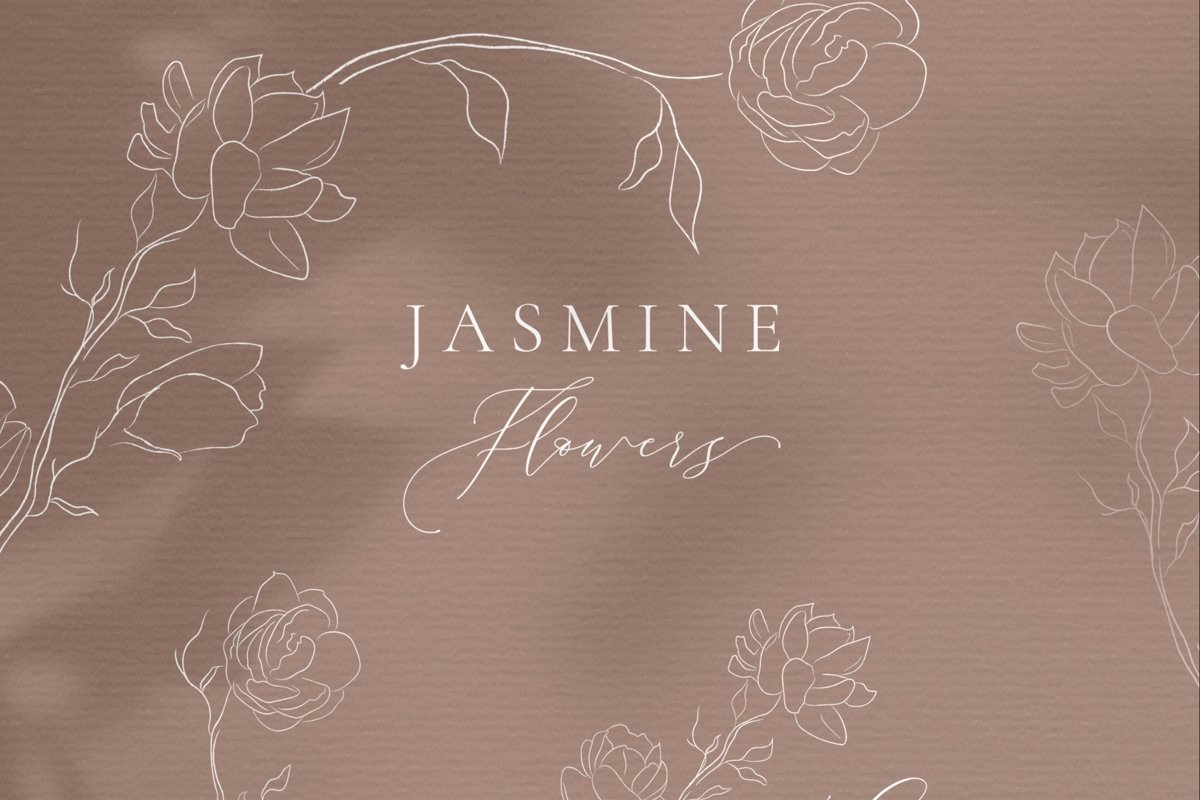 Line drawing White Jasmine Flower illustrations. Wreaths. example image 1
