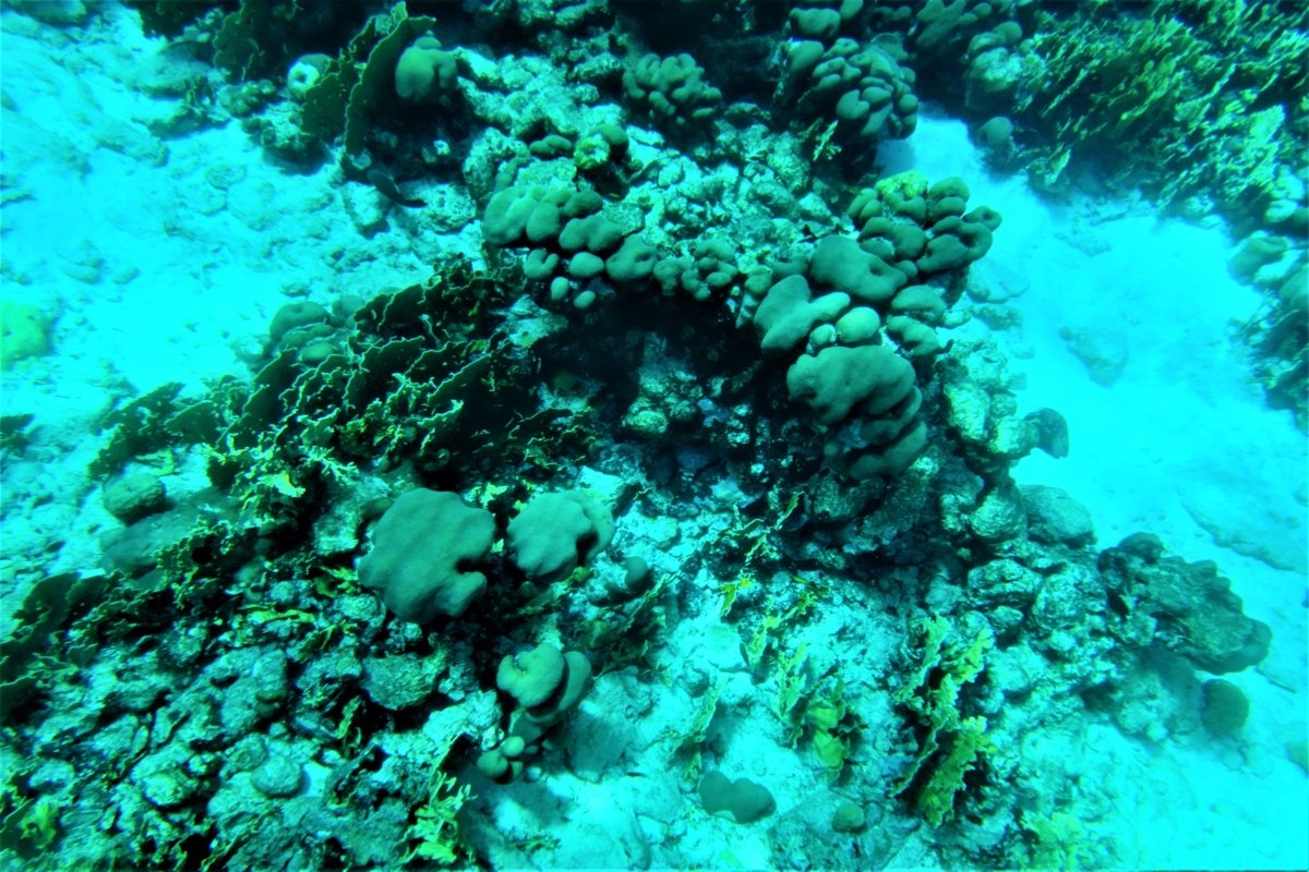 Incredible underwater world in Aruba, the Caribbean example image 1