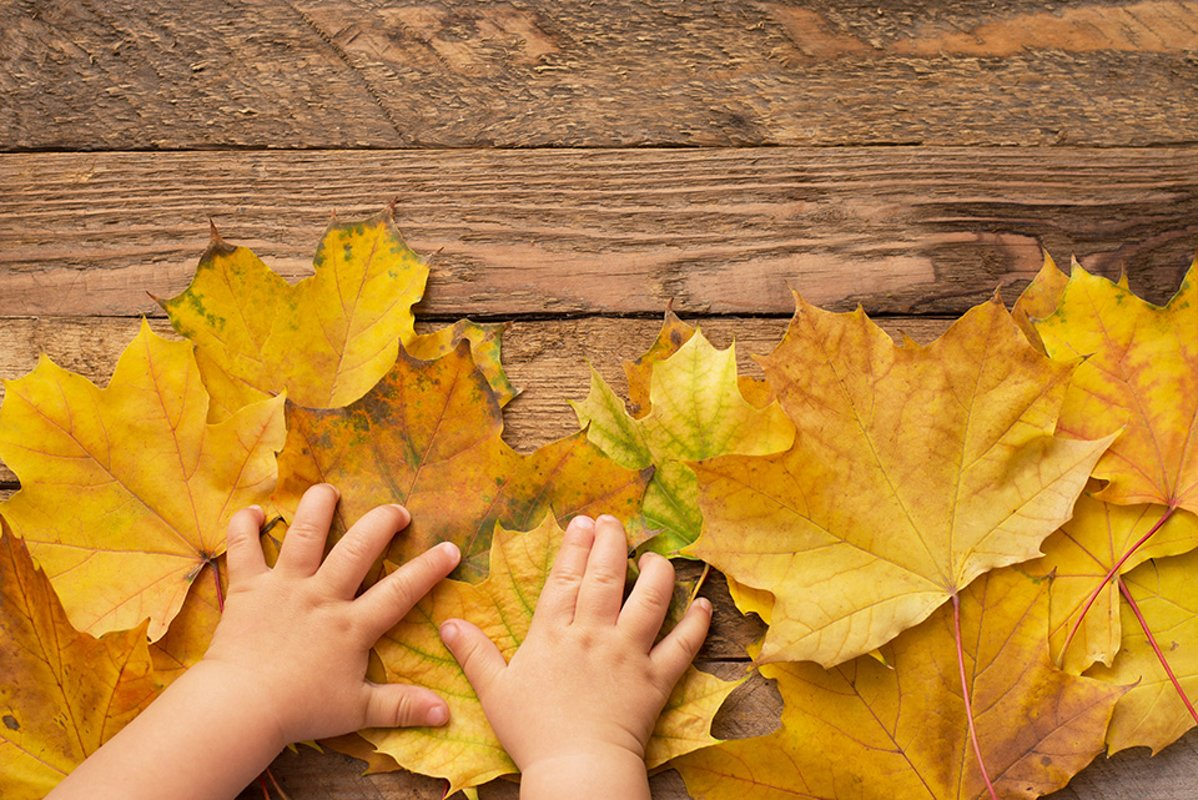 children's hands on fallen leaves on wooden background . example image 1