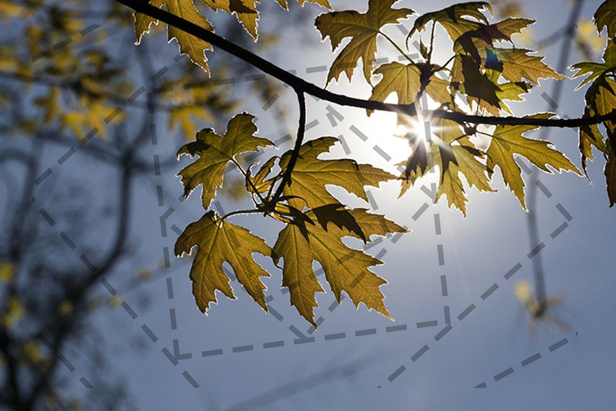 backlit young foliage example image 1