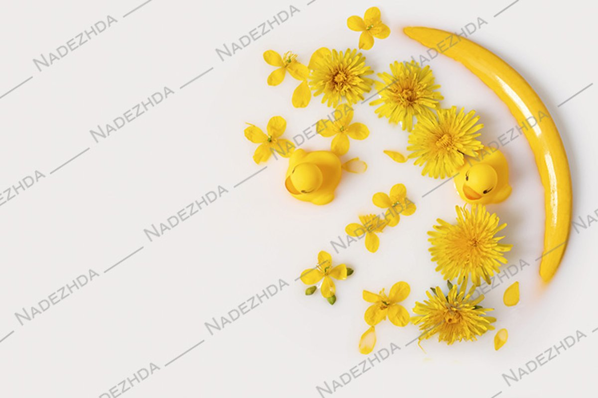 Dandelions and toy ducklings in milk example image 1