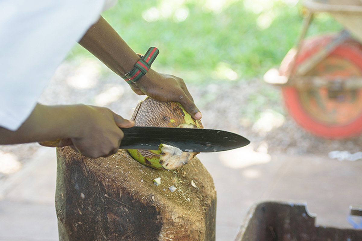 cutting a ripe coconut example image 1