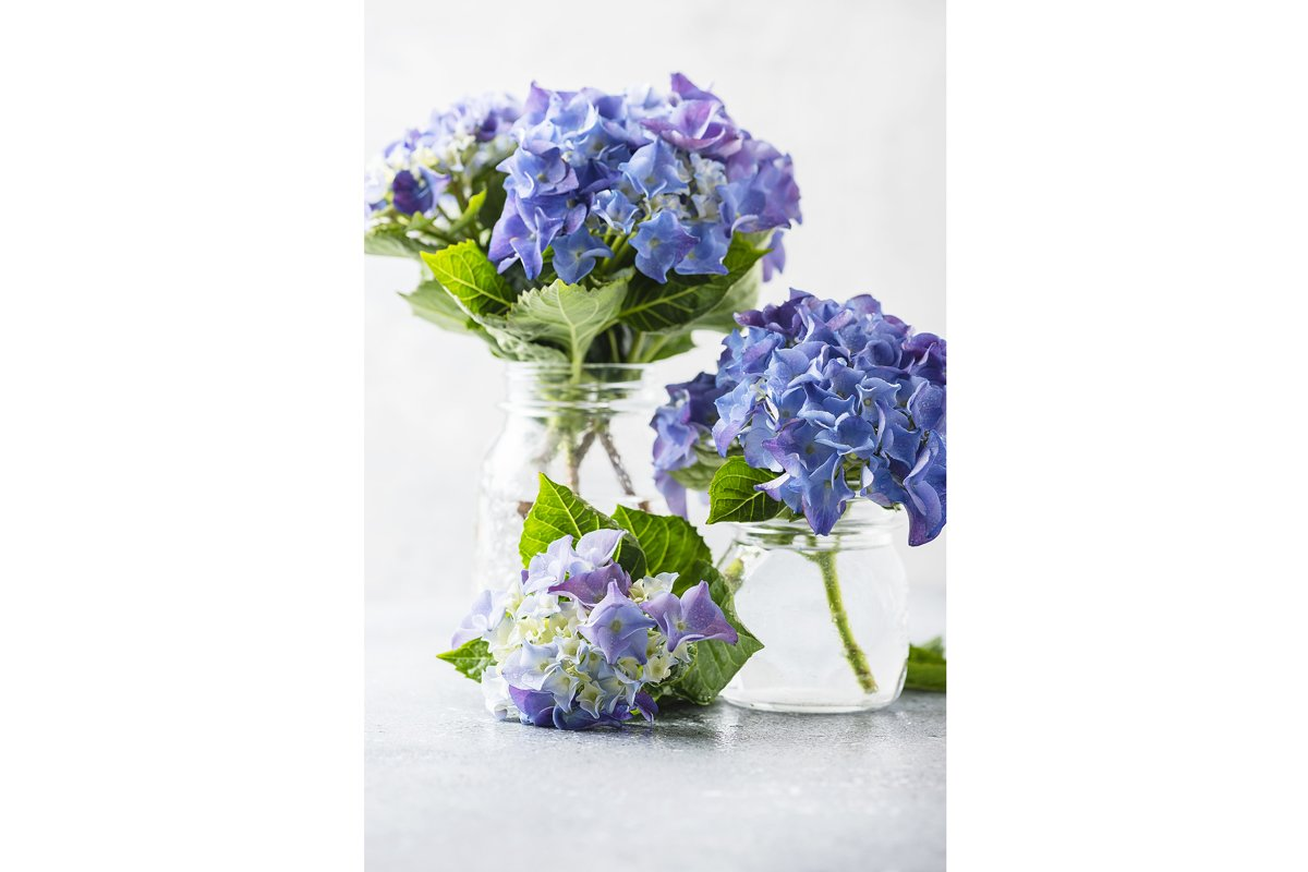 Greeting card concept. Amazing blue hydrangea flowers example image 1