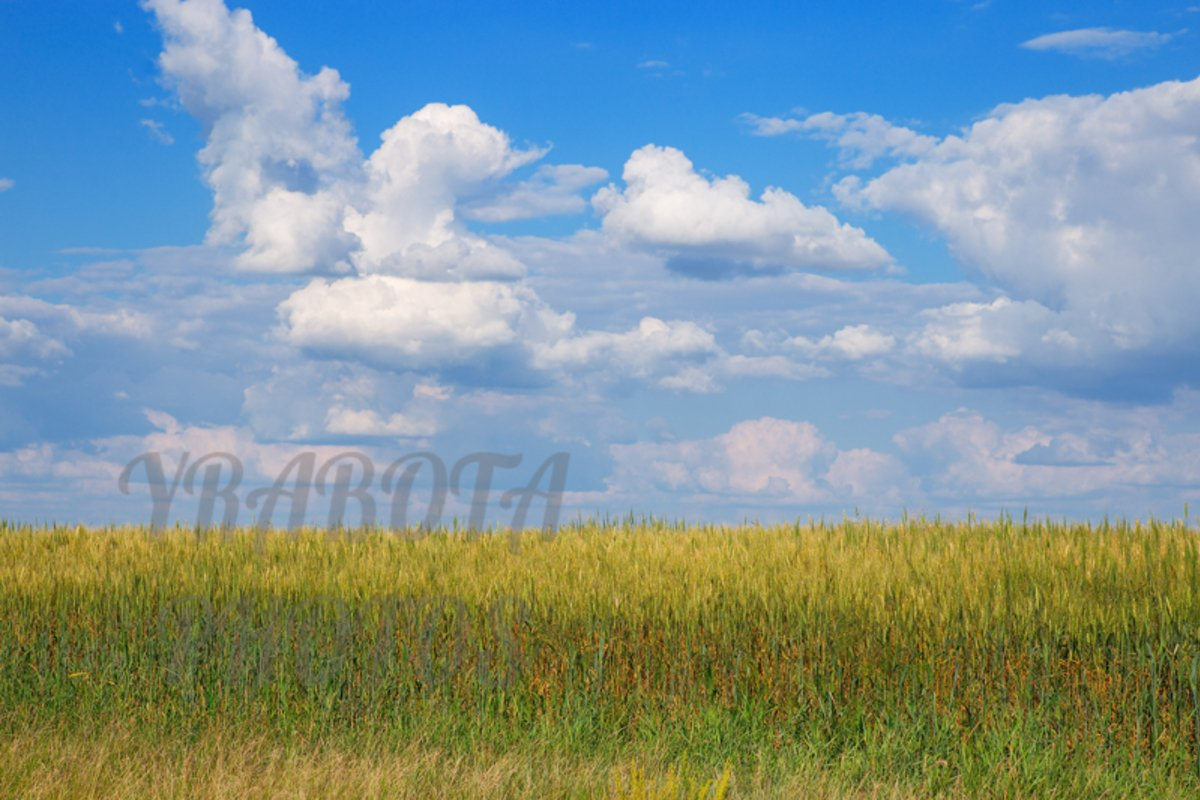Wheat on field and clouds sky example image 1