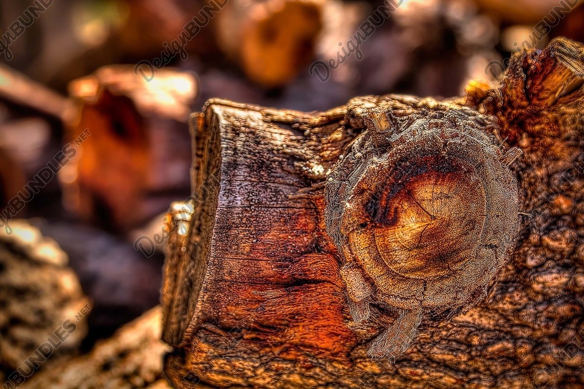 Stock Photo - Full Frame Shot Of Tree Stump example image 1