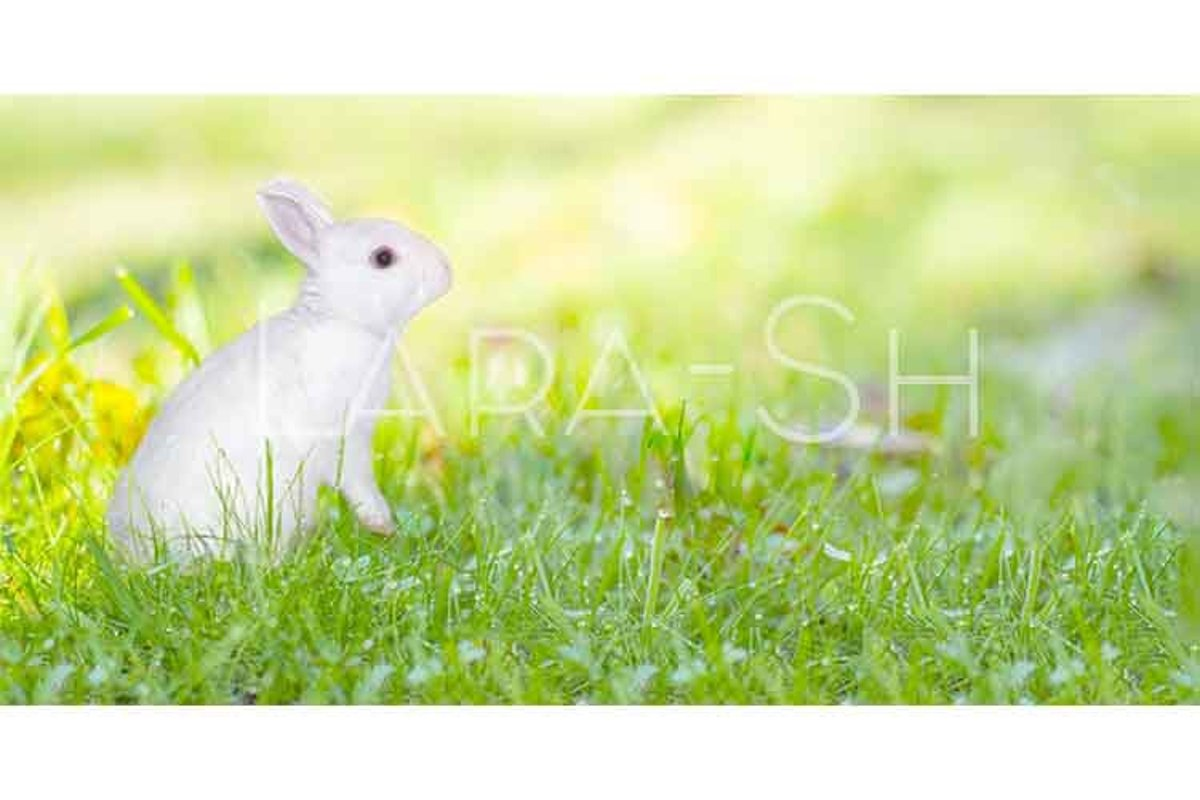 Easter concept with white bunny on fresh green grass example image 1