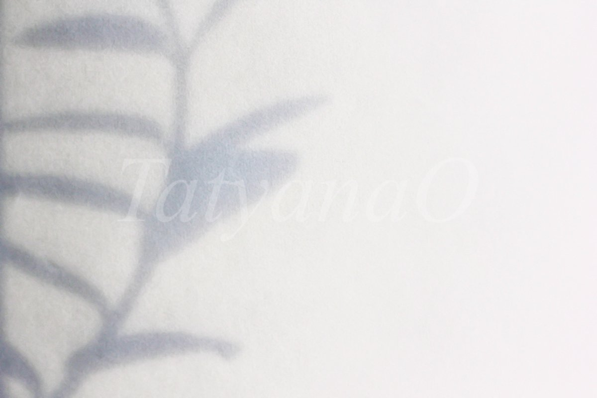 shadow from a flower branch on a white-gray background example image 1