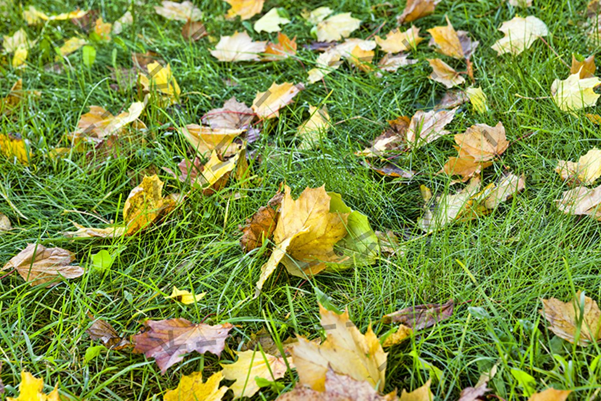 grass foliage autumn. example image 1