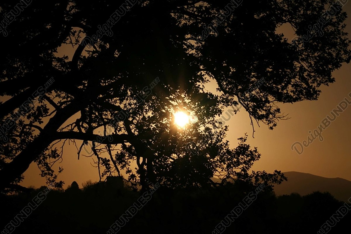 Stock Photo - Silhouette Of Trees At Sunset example image 1