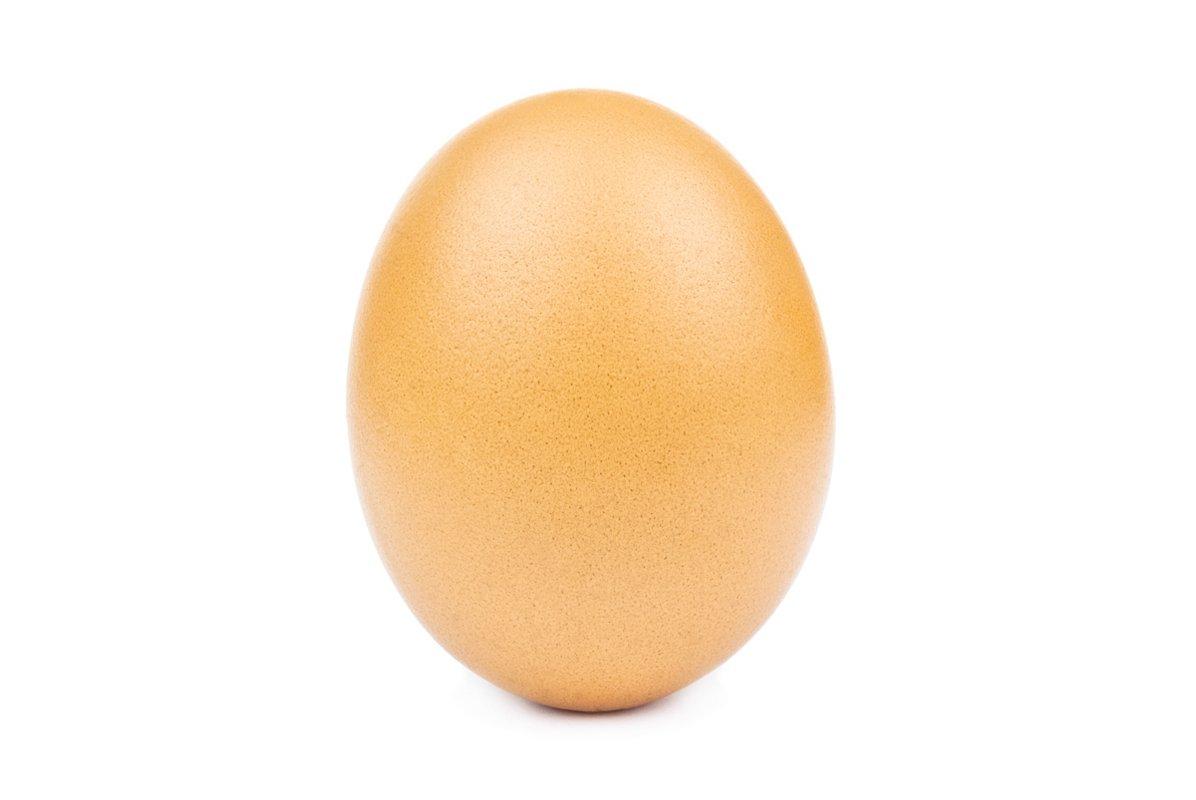 Egg isolated white background cutout example image 1