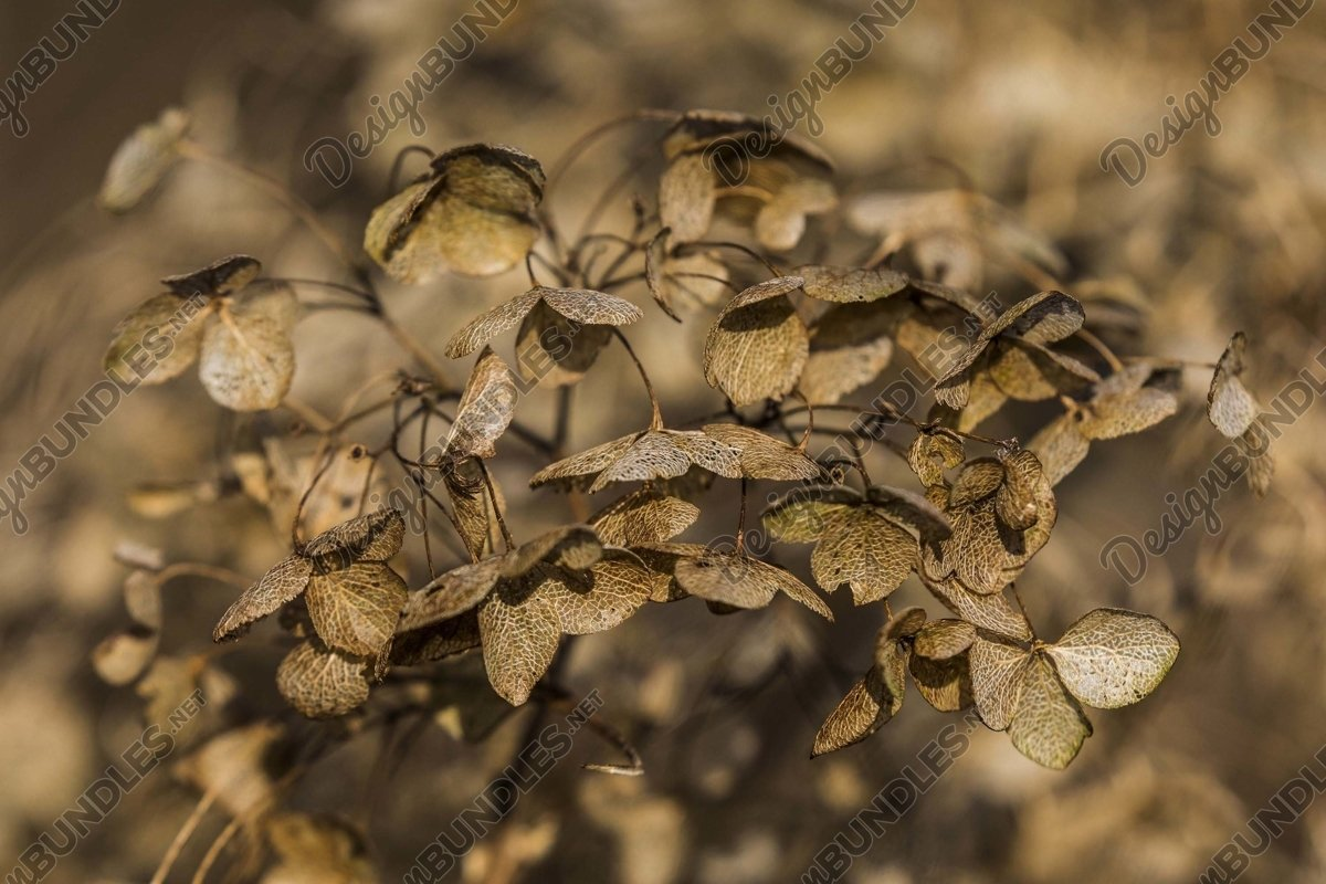 Stock Photo - Close-Up Of Dried Plant On Dry Leaves example image 1
