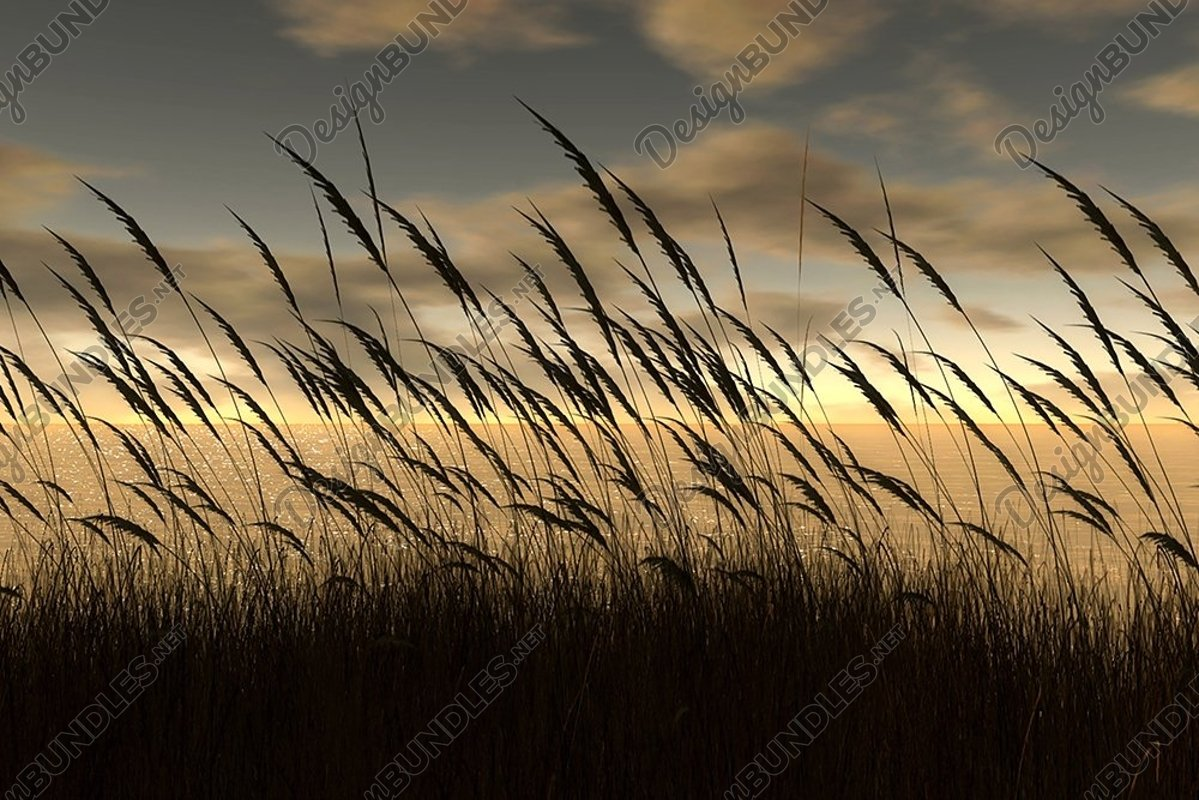 Stock Photo - Close-Up Of Wheat Field Against Sky At Sunset example image 1