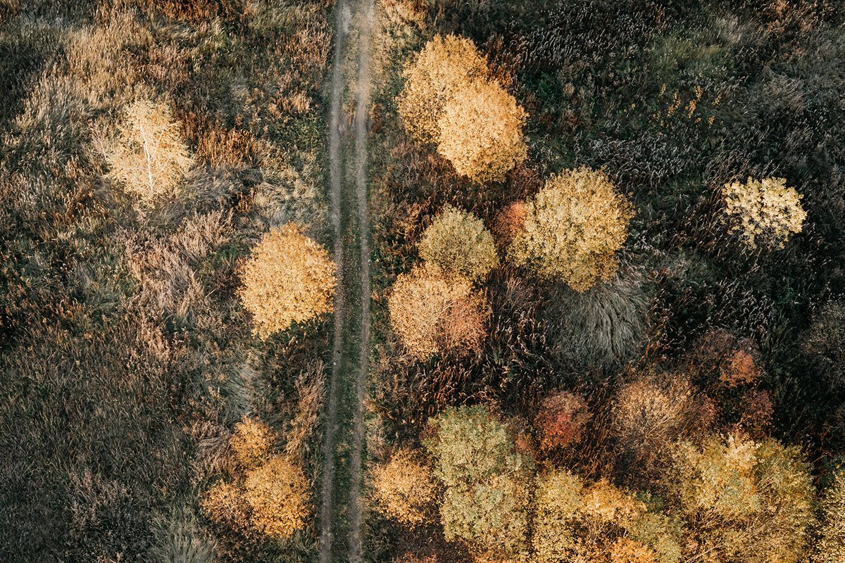Top view of a field with trees. example image 1