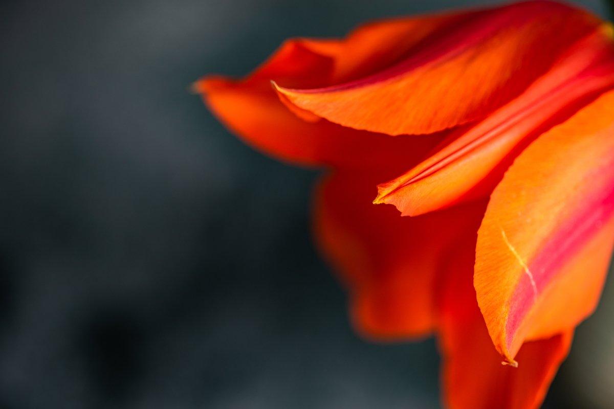 Beautiful tulip flowers bouquet example image 1