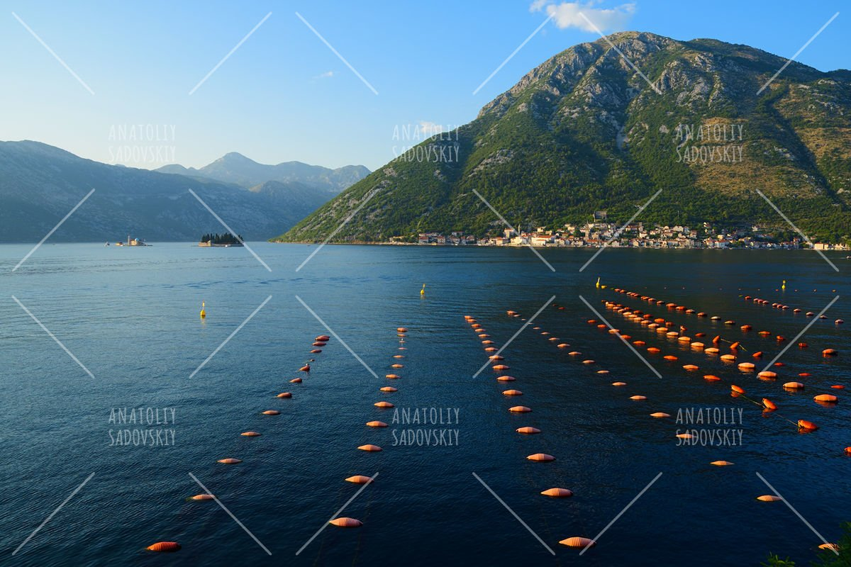 Mussel farm in Bay of Kotor near town Perast, Montenegro example image 1