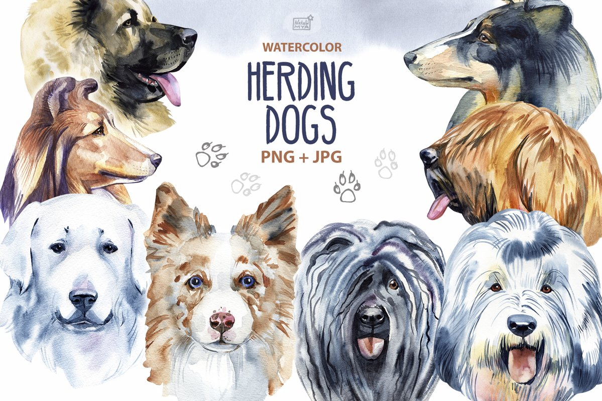 Watercolor herding dogs example image 1