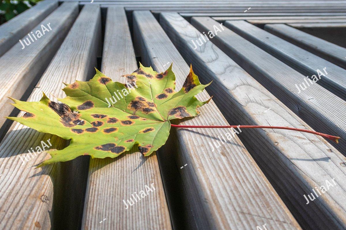 Autumn maple leaf on striped wood background example image 1