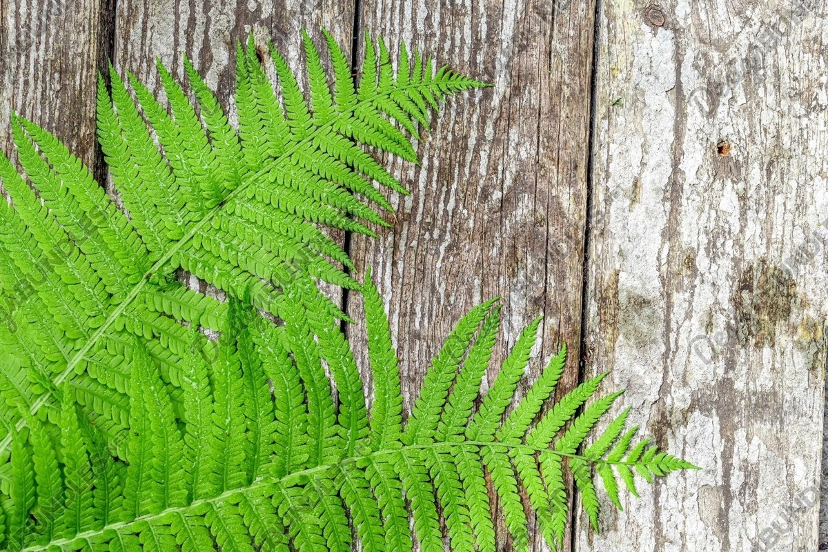 Stock Photo - wood texture and with green leaf decoration example image 1