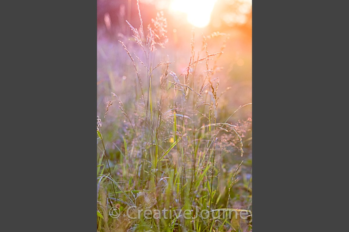 Blurred nature background. example image 1