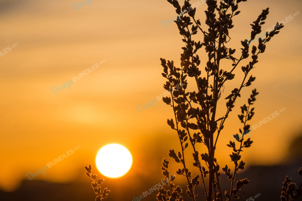 Weed Silhouette at Sunset example image 1