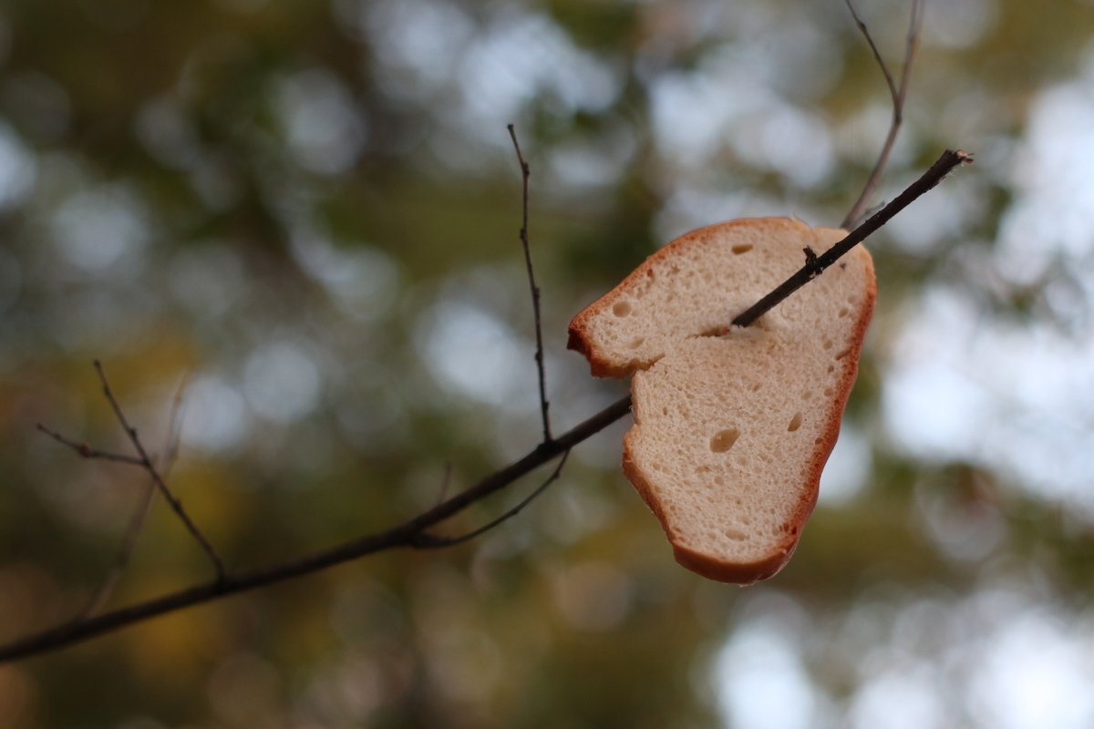 bread for feeding birds and squirrels in winter example image 1
