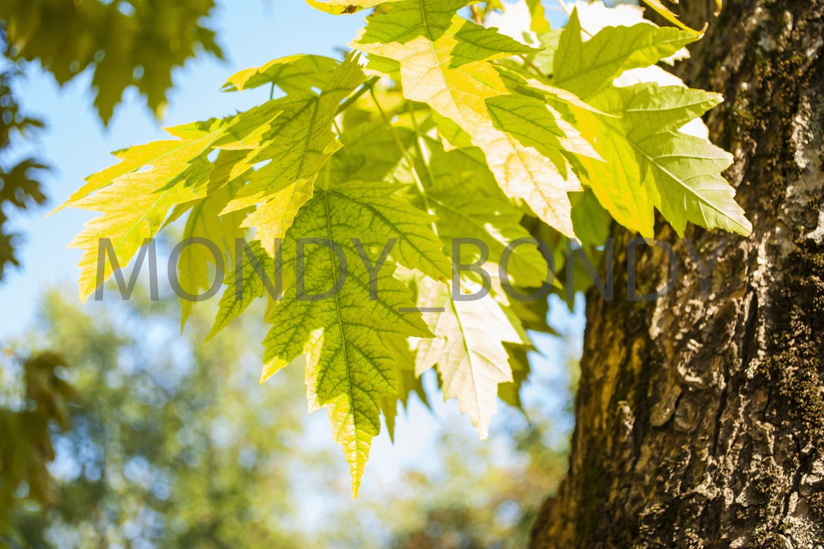 autumn leaves against the blue sky example image 1