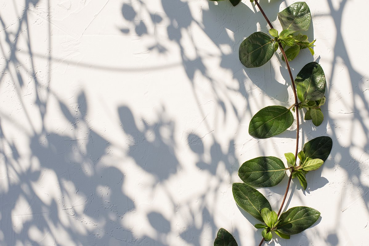 abstract background of shadows leaves example image 1
