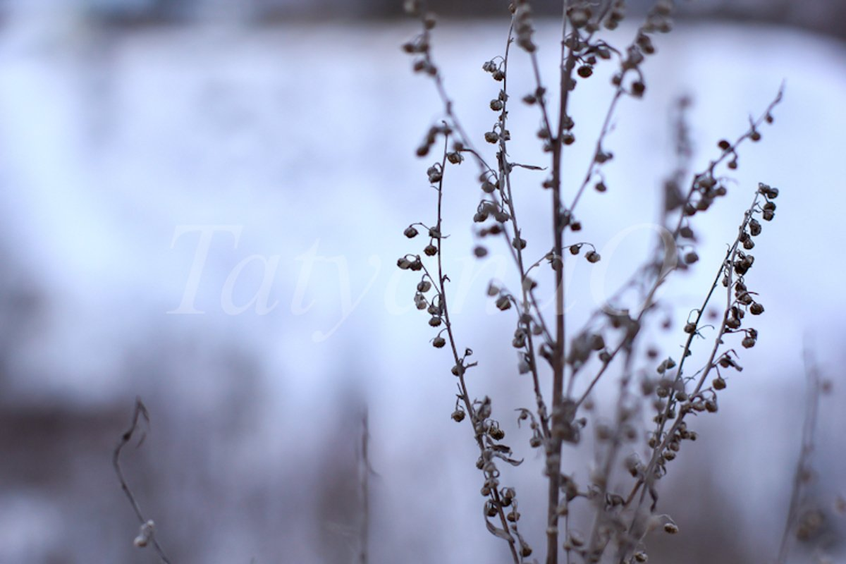 concept of winter mood, atmosphere example image 1