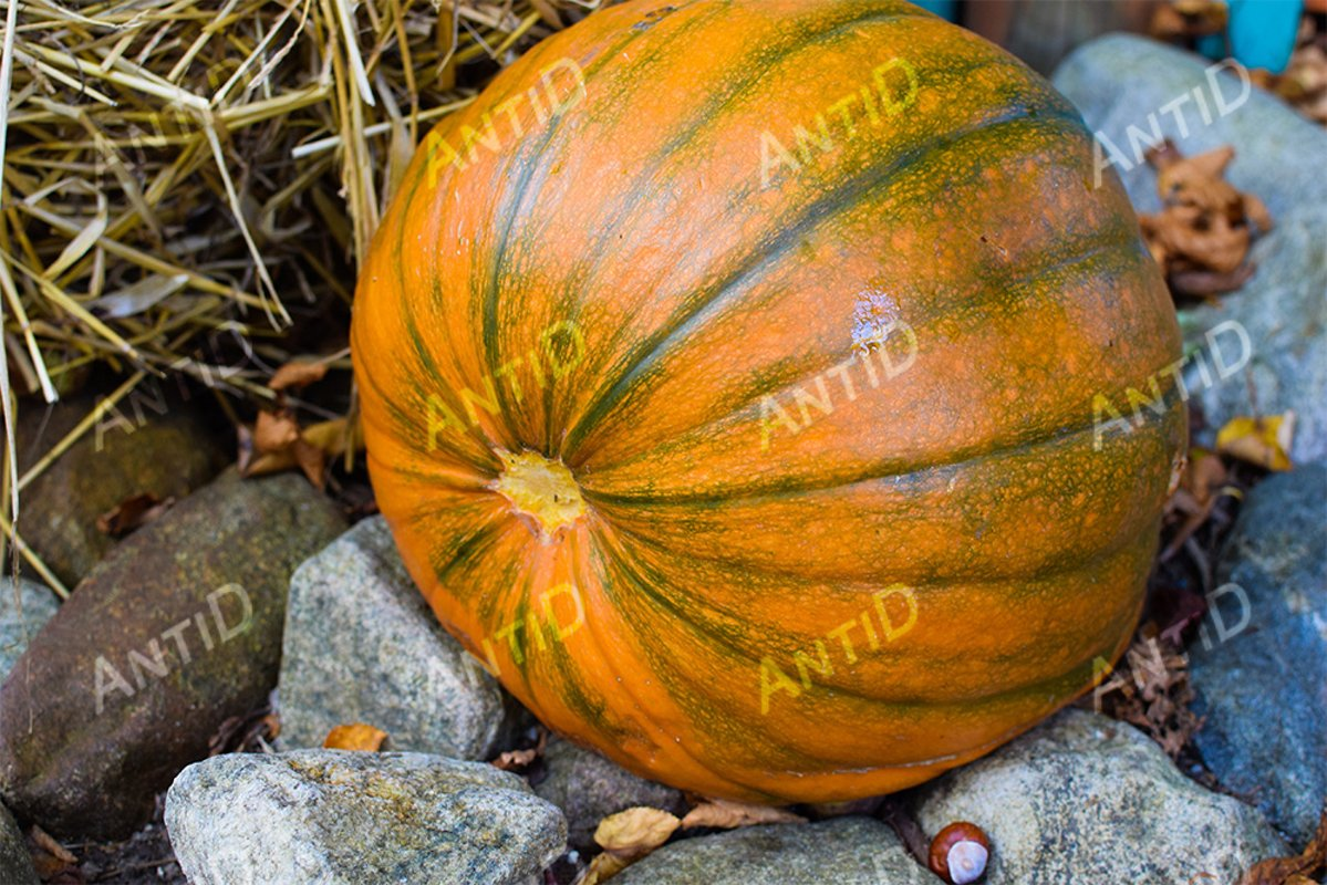 Pumpkin among stones, fallen leaves, chestnuts and straw. example image 1