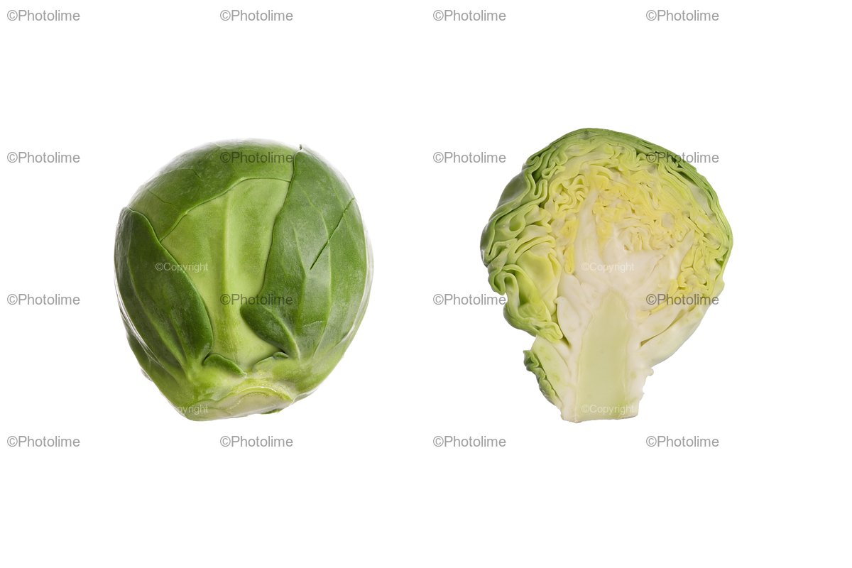 Brussel sprouts isolated. Brassica oleracea. example image 1